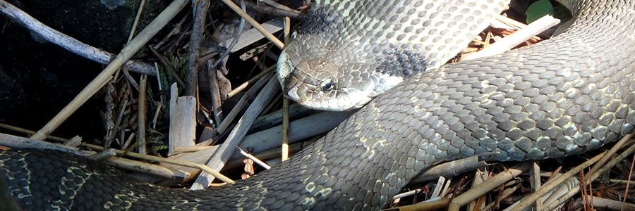 Species At Risk Surveys And Permitting